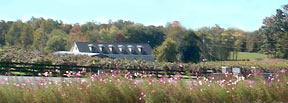 View of Gray Ghost Winery through  flowers planted in median on Route 211 in Amissville